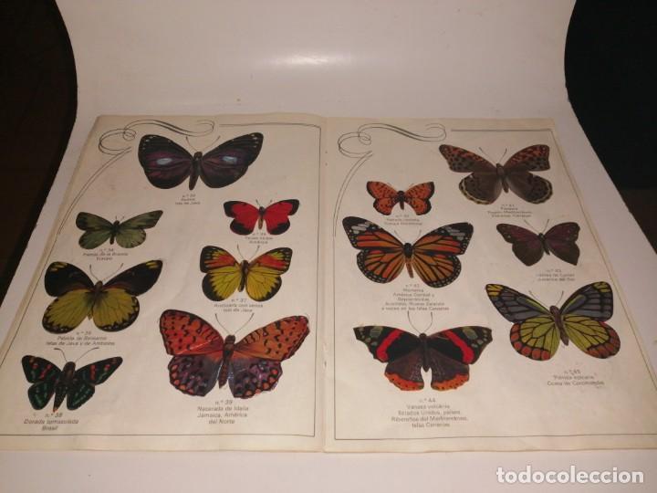 Coleccionismo Álbum: Las cien mariposas más bellas del mundo álbum panrico , completo ver fotos - Foto 6 - 221727193