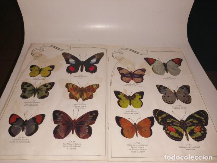 Coleccionismo Álbum: Las cien mariposas más bellas del mundo álbum panrico , completo ver fotos - Foto 7 - 221727193