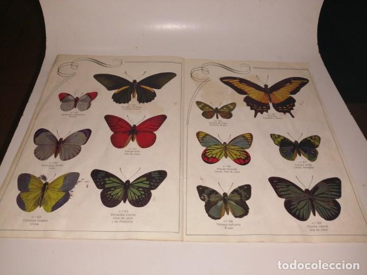 Coleccionismo Álbum: Las cien mariposas más bellas del mundo álbum panrico , completo ver fotos - Foto 8 - 221727193