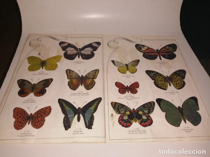 Coleccionismo Álbum: Las cien mariposas más bellas del mundo álbum panrico , completo ver fotos - Foto 9 - 221727193