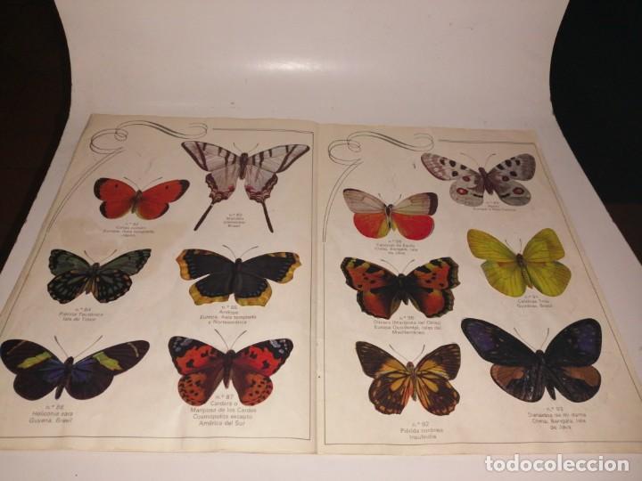 Coleccionismo Álbum: Las cien mariposas más bellas del mundo álbum panrico , completo ver fotos - Foto 10 - 221727193
