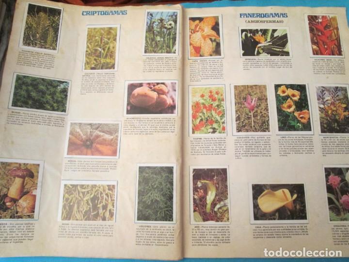 Coleccionismo Álbum: NATURALEZA FHER - Foto 21 - 210358070