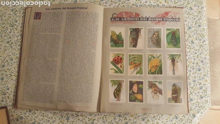 Coleccionismo Álbum: ALBUM DE CROMOS. LAS MARAVILLAS DEL MUNDO. NESTLE - Foto 6 - 257556630