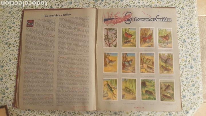Coleccionismo Álbum: ALBUM DE CROMOS. LAS MARAVILLAS DEL MUNDO. NESTLE - Foto 18 - 257556630