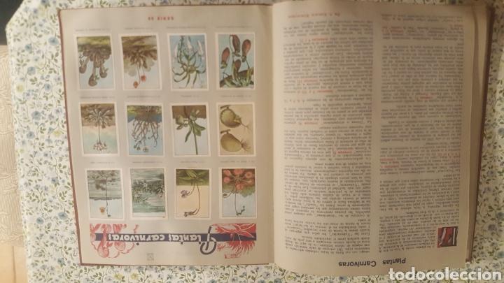 Coleccionismo Álbum: ALBUM DE CROMOS. LAS MARAVILLAS DEL MUNDO. NESTLE - Foto 28 - 257556630