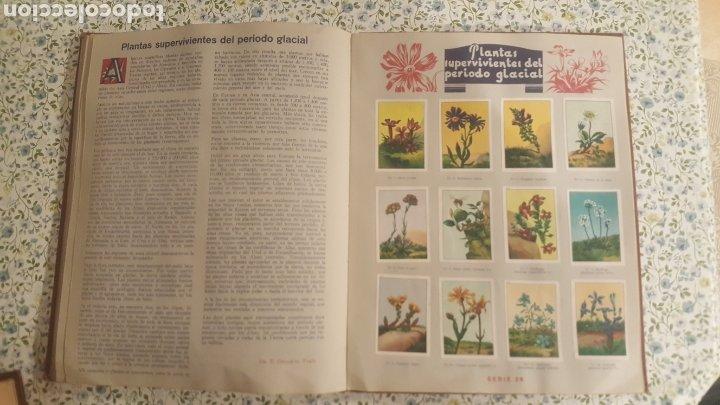 Coleccionismo Álbum: ALBUM DE CROMOS. LAS MARAVILLAS DEL MUNDO. NESTLE - Foto 34 - 257556630