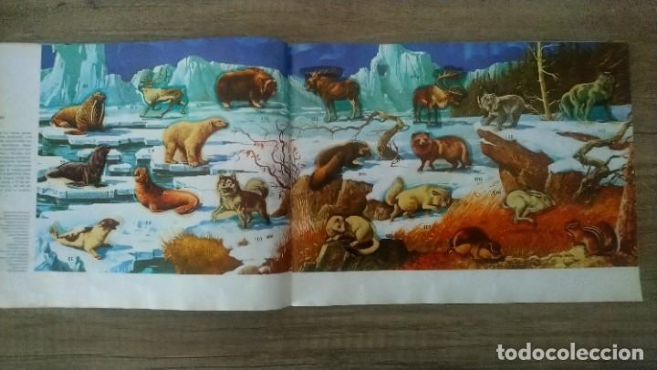 Coleccionismo Álbum: animales salvajes - Foto 7 - 278980678
