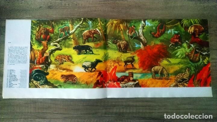 Coleccionismo Álbum: animales salvajes - Foto 8 - 278980678