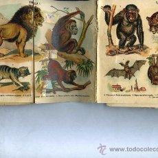 Coleccionismo Álbumes: ALBUM DE HISTORIA NATURAL Nº I MAMÍFEROS SON XII TABLAS DE 17X 14 CM COGIDAS EN ACORDEÓN . Lote 31302285