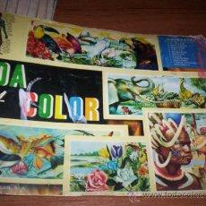 Coleccionismo Álbumes: VIDA Y COLOR - ALBUMES ESPAÑOLES - ( FALTAN 50 CROMOS ). Lote 37265169