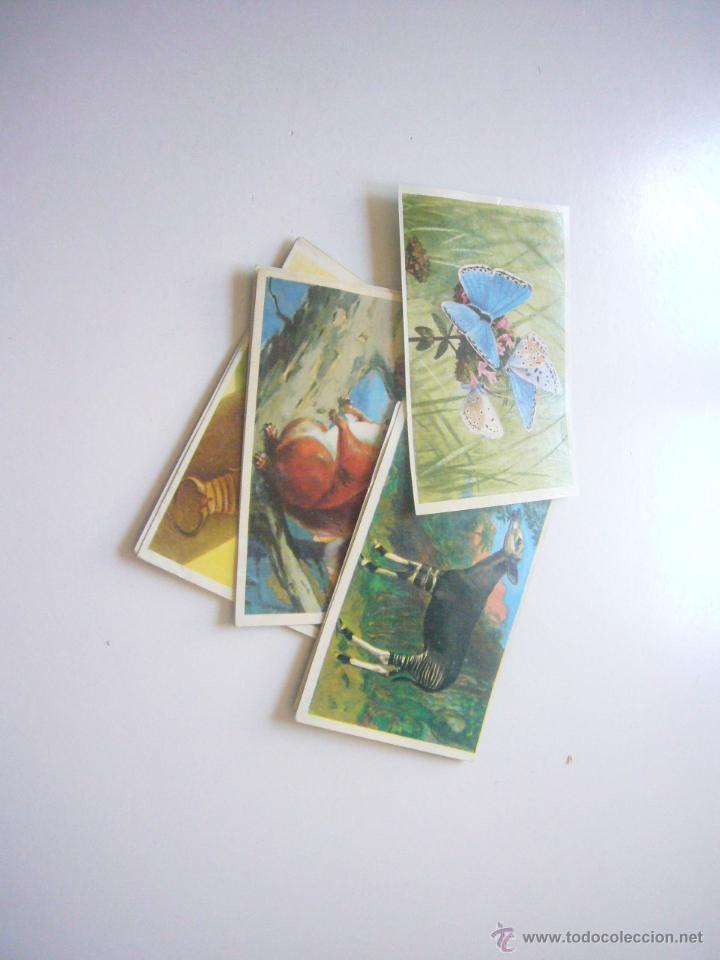 Coleccionismo Álbumes: GRAN ALBUM FÉLIX RODRÍGUEZ DE LA FUENTE EL AMIGO DE LOS ANIMALES CON 305 DE 400 CROMOS BRUGUERA dar - Foto 3 - 43120784