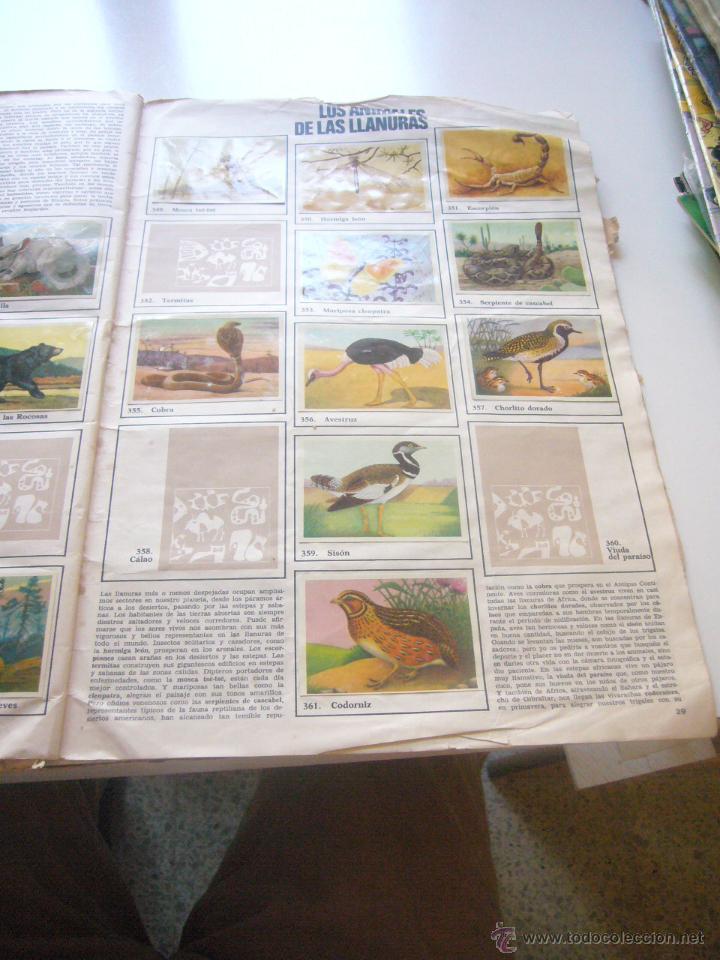 Coleccionismo Álbumes: GRAN ALBUM FÉLIX RODRÍGUEZ DE LA FUENTE EL AMIGO DE LOS ANIMALES CON 305 DE 400 CROMOS BRUGUERA dar - Foto 5 - 43120784