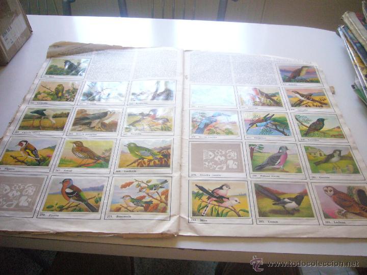 Coleccionismo Álbumes: GRAN ALBUM FÉLIX RODRÍGUEZ DE LA FUENTE EL AMIGO DE LOS ANIMALES CON 305 DE 400 CROMOS BRUGUERA dar - Foto 6 - 43120784