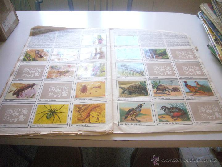 Coleccionismo Álbumes: GRAN ALBUM FÉLIX RODRÍGUEZ DE LA FUENTE EL AMIGO DE LOS ANIMALES CON 305 DE 400 CROMOS BRUGUERA dar - Foto 7 - 43120784