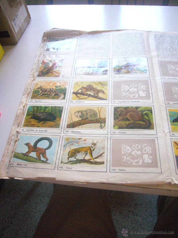 Coleccionismo Álbumes: GRAN ALBUM FÉLIX RODRÍGUEZ DE LA FUENTE EL AMIGO DE LOS ANIMALES CON 305 DE 400 CROMOS BRUGUERA dar - Foto 8 - 43120784