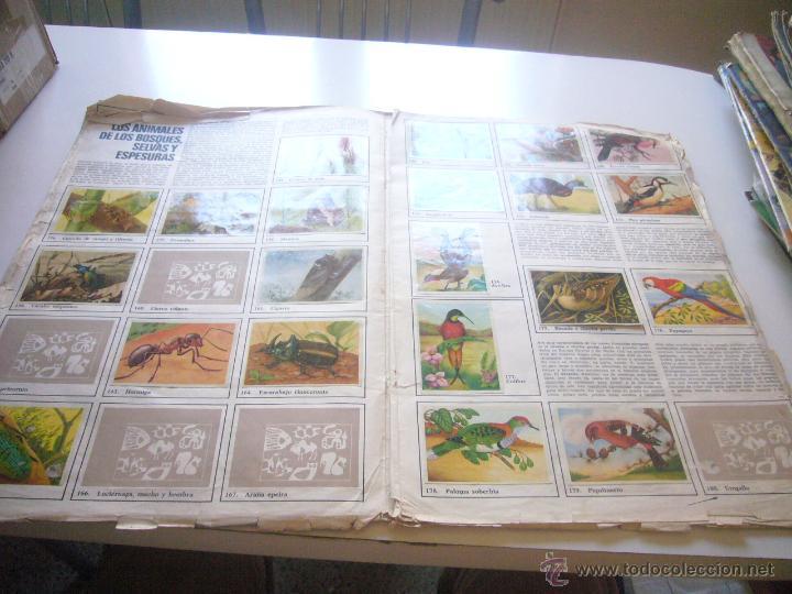 Coleccionismo Álbumes: GRAN ALBUM FÉLIX RODRÍGUEZ DE LA FUENTE EL AMIGO DE LOS ANIMALES CON 305 DE 400 CROMOS BRUGUERA dar - Foto 9 - 43120784