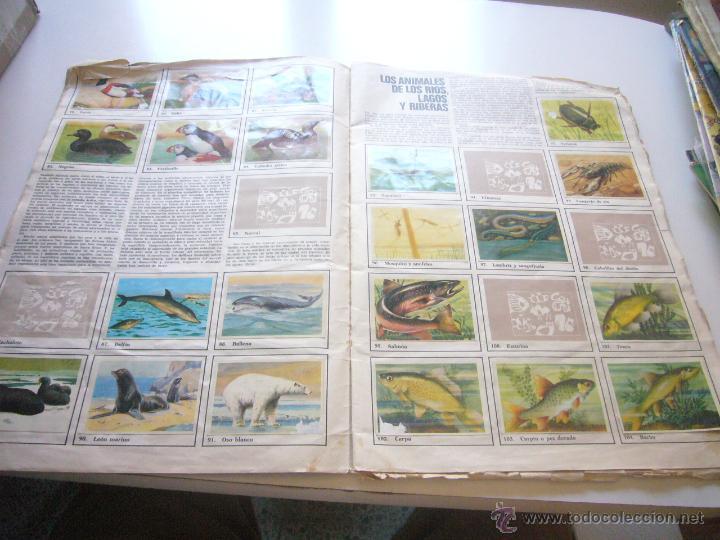 Coleccionismo Álbumes: GRAN ALBUM FÉLIX RODRÍGUEZ DE LA FUENTE EL AMIGO DE LOS ANIMALES CON 305 DE 400 CROMOS BRUGUERA dar - Foto 10 - 43120784