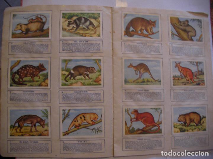 Coleccionismo Álbumes: ANTIGUO ALBUM DE CROMOS ZOOLOGIA - EL MUNDO DE LOS ANIMALES - Foto 2 - 107732159