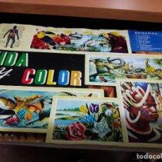Coleccionismo Álbumes: VIDA Y COLOR A FALTA DE 2 CROMOS. Lote 120457543
