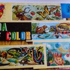 Coleccionismo Álbumes: ALBUM VIDA Y COLOR INCOMPLETO FALTA SOLO 1 EL 129 . Lote 121392027