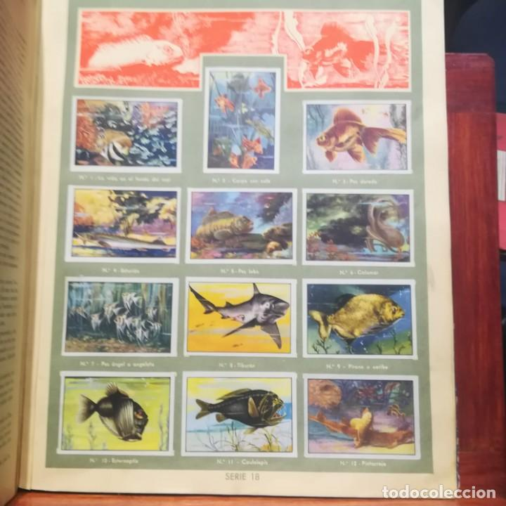 Coleccionismo Álbumes: GALLINA BLANCA- 2 ALBUMS- Nº 1 COMPLETO ,Nº 2 A FALTA DE 9 CROMOS-MUY BUEN ESTADO-VER FOTOS - Foto 23 - 165119974
