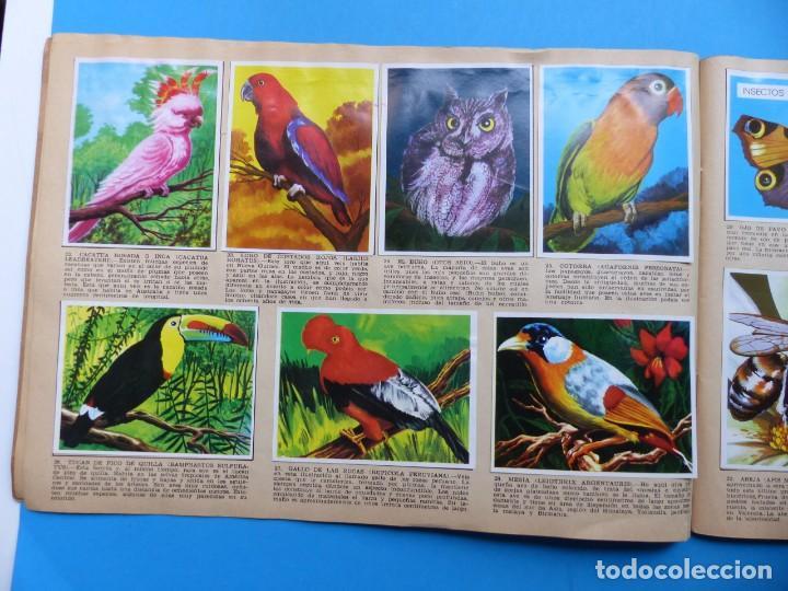Coleccionismo Álbumes: ALBUM CROMOS LA NATURALEZA Y EL HOMBRE - LE FALTAN 34 CROMOS - ED. MAGA - VER DESCRIPCION Y FOTOS - Foto 6 - 166864688