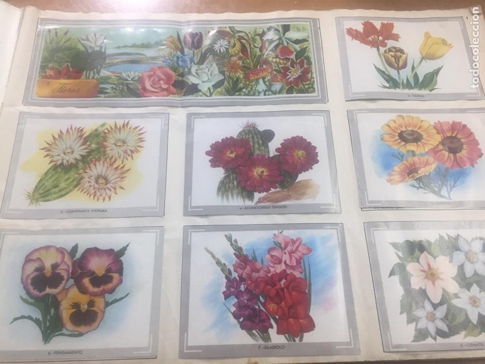 Coleccionismo Álbumes: Álbum vida y color (falta el 218) - Foto 2 - 183863497