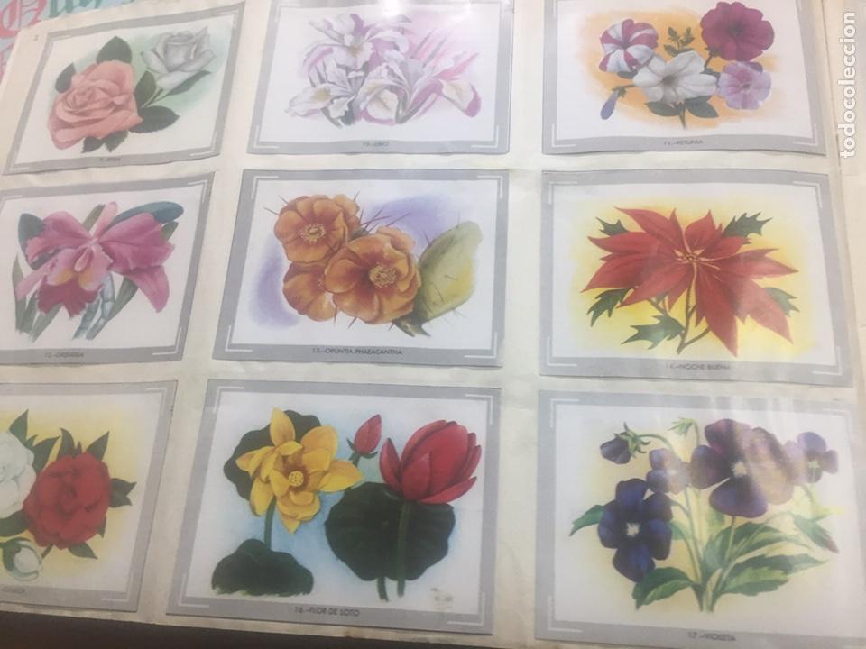 Coleccionismo Álbumes: Álbum vida y color (falta el 218) - Foto 3 - 183863497