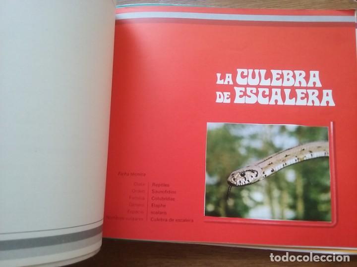Coleccionismo Álbumes: DESCUBRIENDO LA NATURALEZA, REPTILES ANFIBIOS Y PECES, HOBBY CLUB INTERNACIONAL LARFE EDICIONES 1973 - Foto 2 - 189205985
