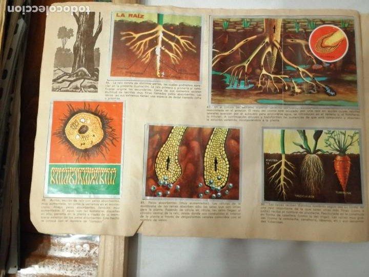 Coleccionismo Álbumes: ÁLBUM EL UNIVERSO Y LA TIERRA. - Foto 13 - 197168636