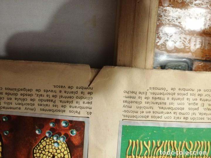 Coleccionismo Álbumes: ÁLBUM EL UNIVERSO Y LA TIERRA. - Foto 14 - 197168636