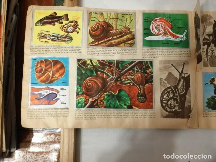 Coleccionismo Álbumes: ÁLBUM EL UNIVERSO Y LA TIERRA. - Foto 26 - 197168636