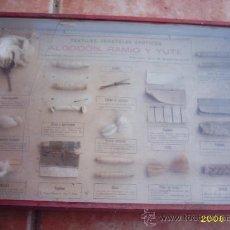 Antigüedades: CAJA DIDÁCTICA S- XIX PARA MUSEO. Lote 15081781