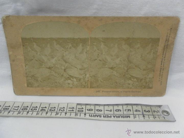 Antigüedades: Visor estereoscópico de caoba. Siglo XIX / XX. Se acompaña con 9 vistas - Foto 12 - 43844505