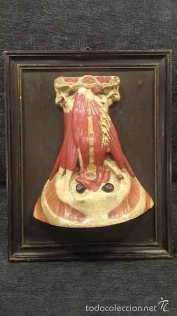 anatomia humana,modelo anatomico,musculo - Comprar Herramientas ...