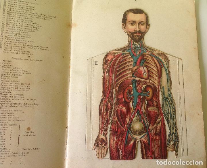 muy antiguas anatomias- estudio del cuerpo huma - Comprar Varias ...