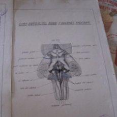 Antigüedades: LAMINAS ANATOMIA,ESTUDIO DEL CUERPO HUMANO. Lote 78596149
