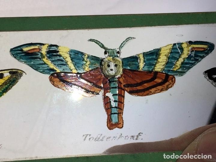 Antigüedades: CRISTALES PARA LINTERNA MÁGICA. CON FÁBULAS. FRANCIA. ALEMANIA. CIRCA 1850 - Foto 6 - 81997188