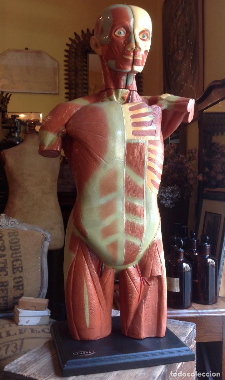 antigua anatomia escuela - cuerpo humano desmon - Comprar Varias ...