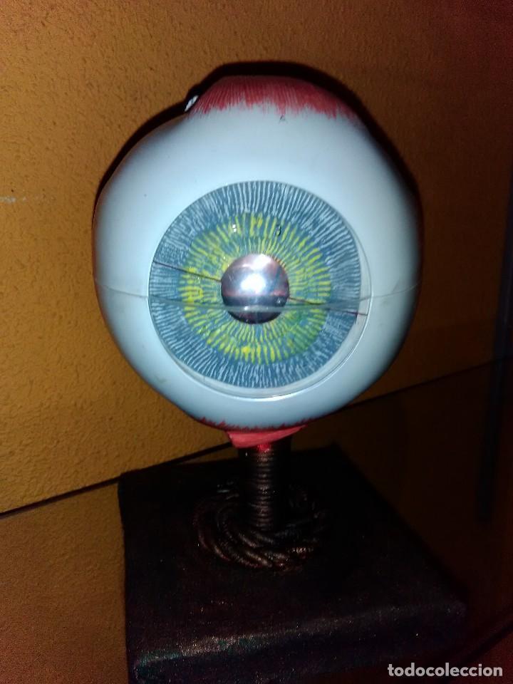 ojo anatómico - Comprar Herramientas Profesionales Medicina en ...