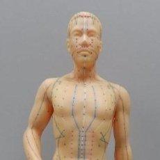 Antiquitäten - Maniquí para acupuntura. Figura humana de 49 cm de alto con puntos de acupuntura para practicar. Imp - 113043999