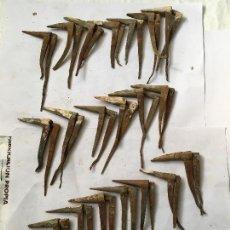 Antigüedades: LOTE 20 BISAGRAS DE CAPUCHINA. Lote 115626375