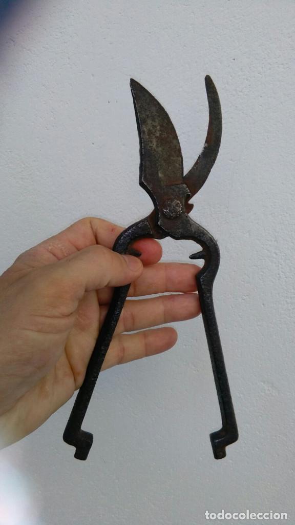 Antigüedades: tijeras de poda antigua - Foto 3 - 119189951