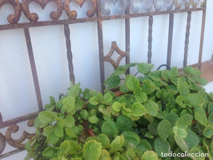 Antigua Reja Hierro Para Macetero Jardinera Te Sold