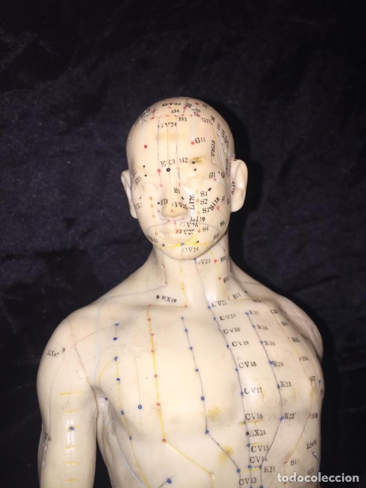 Antigüedades: Antiguo muñeco anatómico de acupuntura - Foto 2 - 127523216