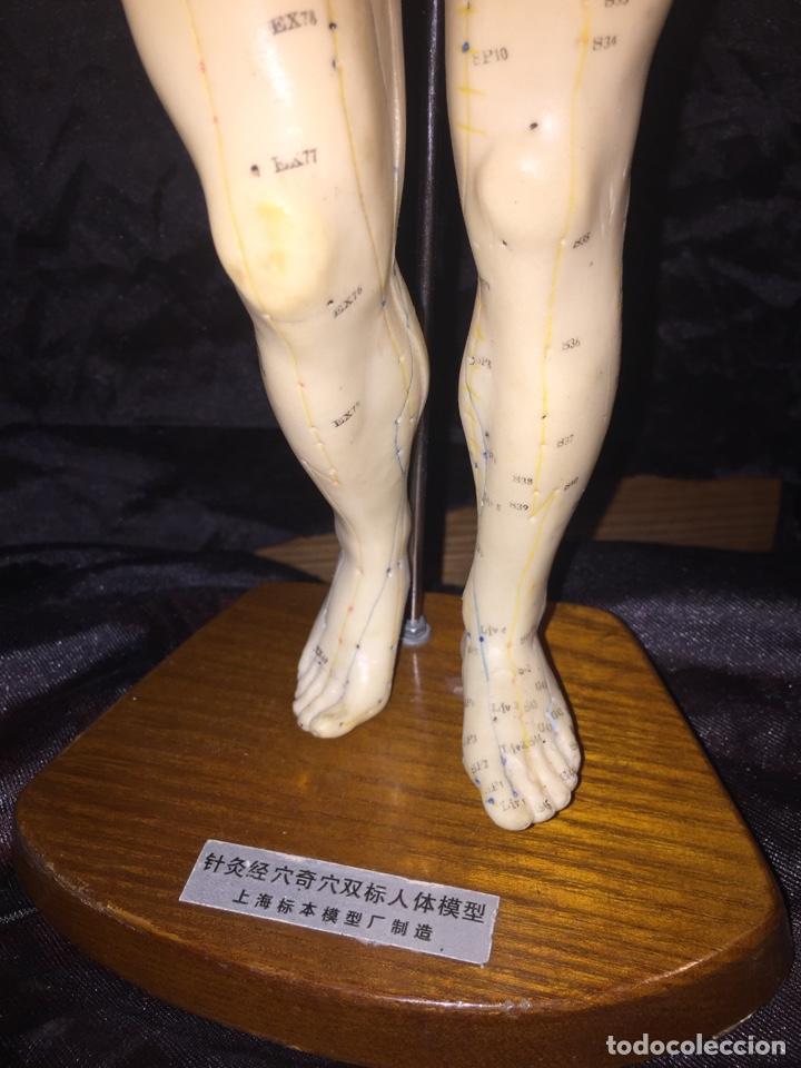 Antigüedades: Antiguo muñeco anatómico de acupuntura - Foto 3 - 127523216