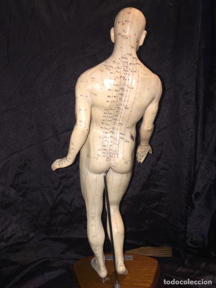 Antigüedades: Antiguo muñeco anatómico de acupuntura - Foto 4 - 127523216
