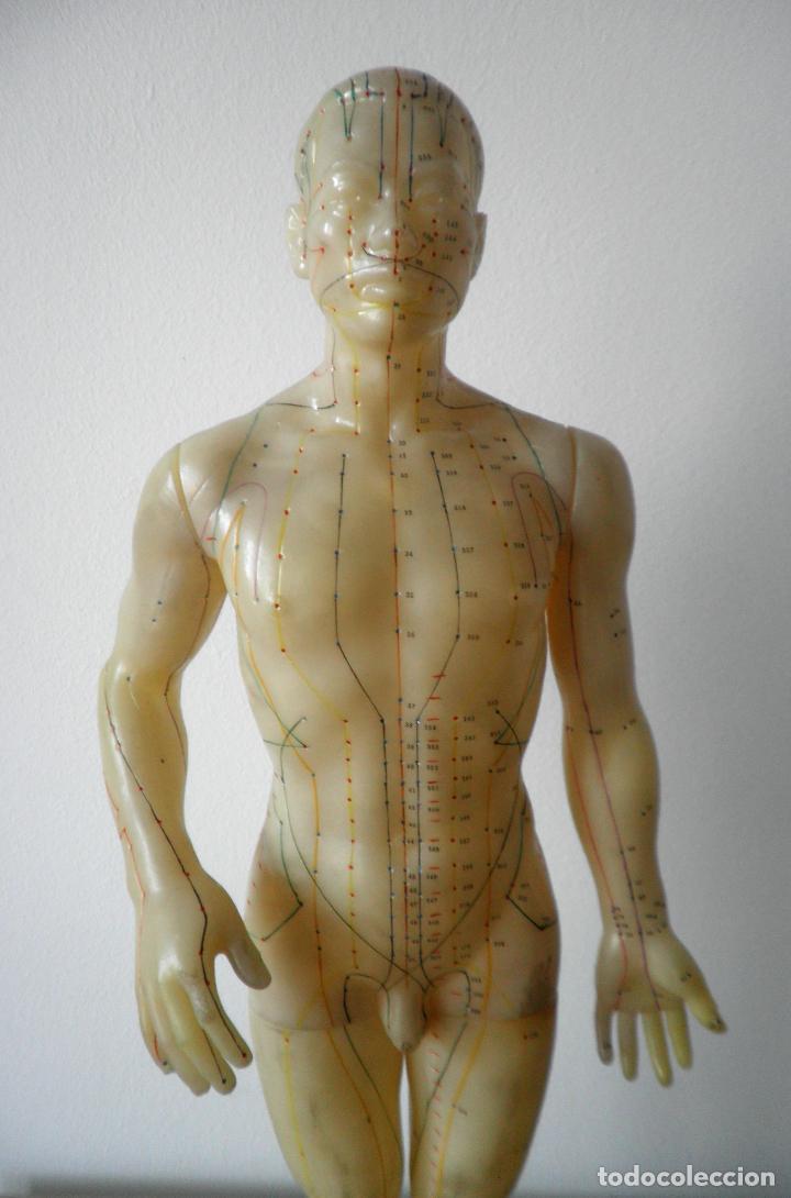 MODELO DE ACUPUNTURA CHINO - ORIGINAL AÑOS 60. (Antigüedades - Técnicas - Herramientas Profesionales - Medicina)