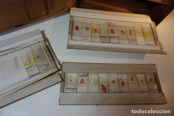 Antigüedades: VINTAGE CABINET para PREPARACIONES DE MICROSCOPIO c. 1920 - Foto 7 - 142063104