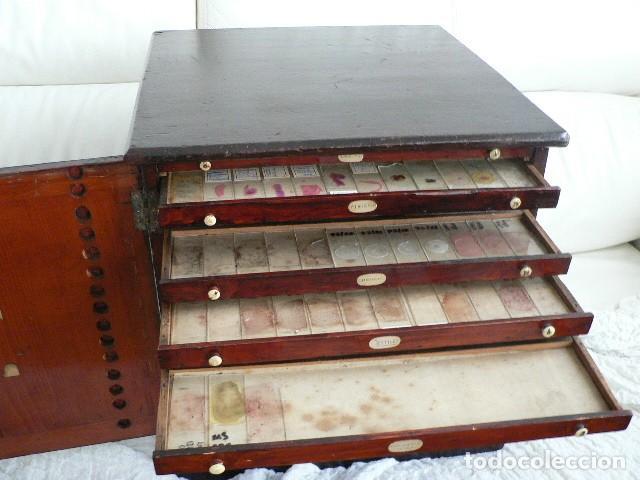 Antigüedades: MICROSCOPIO, CABINET PARA PREPARACIONES MICROSCÓPICAS c. 1880 - Foto 12 - 142601034